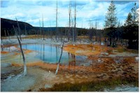Wetland contaminated from toxic pollution - species die-off