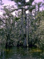 Aquatic plants and flood tolerant trees