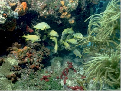 Healthy coral reef full of life
